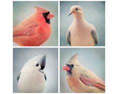 Hey, I found this really awesome Etsy listing at https://www.etsy.com/listing/99542958/animal-wall-art-bird-photography-bird