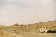 Gelukszoeker. Rossi (dat oranjegele stipje) in Palmyra.