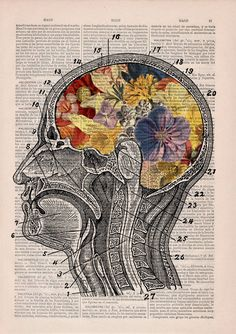 prrint-floral-anatomy-5