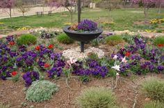 https://flic.kr/p/dxdzn6   2110925980049217838TVrqvm_fs   Botanical Gardens of the Ozarks