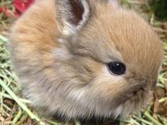 CUTE ALERT! Baby bunny - 20 days old. Another pet available soon for adoption.. oasisanimalrescue.ca