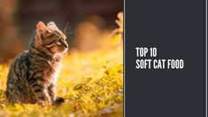 Perfect Image, Perfect Photo, Love Photos, Cool Pictures, Food Lists, Cat Food, Thats Not My, Foods, Cats