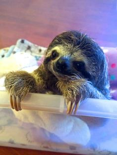 So next time you're feeling down, | Meet Lunita, The Cutest Baby Sloth On Planet Earth
