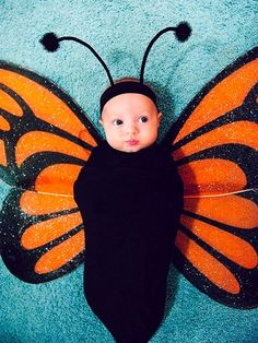 Adorable baby butterfly costume!
