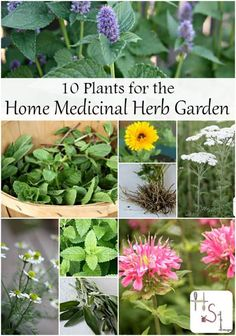 Forget the exotic and begin with these 10 plants for the home medicinal herb garden for homegrown teas, tinctures, salves, and more easily made at home. http://homespunseasonalliving.com/11885-2/