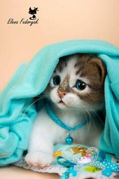 Kitten Pugovka by By Elena Fedoryak | Bear Pile