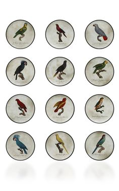Richard Ginori Perroquet Porcelain Plates