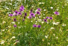 How I transformed my lawn into a beautiful NearbyWild
