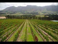 Hemel en Aarde Valley #SouthAfrica