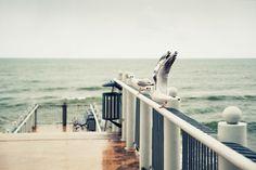 Gulls by Sergey Povoroznyuk, via 500px