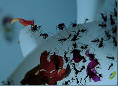 Robin Meier, Ali Momeni and the sound of insects