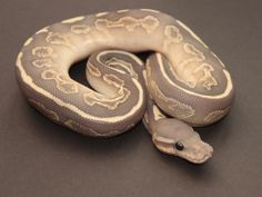Black Pastel Butter Ghost