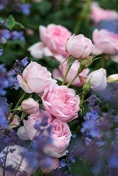Amazing Flowers, Beautiful Roses, Beautiful Gardens, Beautiful Flowers, Pink Roses, Pink Flowers, Small Flowers, Love Rose, Paper Roses