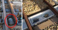 http://www.boredpanda.com/turtle-tunnel-train-track-safety-japan-railways/?utm_source=facebook