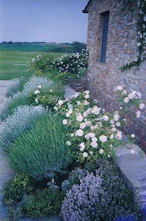 Informal Tuscan Garden  :    Bella Terra Garden Design