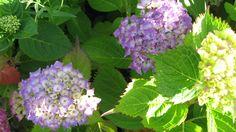 Bleu sablais