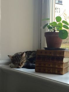 Snoozing cat, old books, and a bit of green