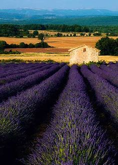 Provencal Summer.  Can you smell the lavender?