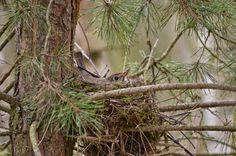 NAŠE ZAHRADY: Příroda hnízdí rozmnožování pudově velí postarat s...