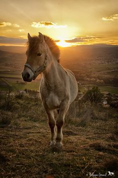 Cute horse at sunset.