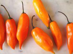 "El ají amarillo, uno de los ajíes más utilizados en la cocina peruana. / The ""ají amarillo"" or yellow chili pepper, one of the most used in Peruvian cuisine. #chili #chilipepper #peru"