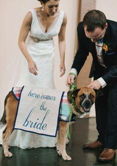 Ideias originais com cães e gatos para casamentos. #casamento #ideias #noivos #animais #cães