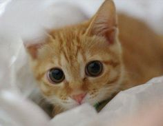 Wide-eyed baby :)