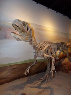 Piatnitzkysaurus, MEF Trelew. Dinosauria, Saurischia, Theropoda, Megalosauroidea. Auteur : Gastón Cuello, 2015.