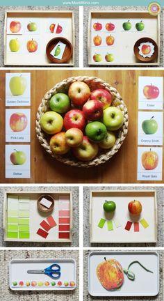 Apple Theme Week Plus herunterladen - Montessori Tabletts Granny Smith, Montessori Trays, Childrens Books, Pink, Apple, Homemade, Fruit, Blog, Bridge