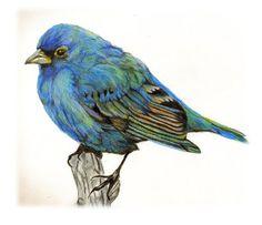 Hình Vẽ Chim Đẹp Và Ấn Tượng