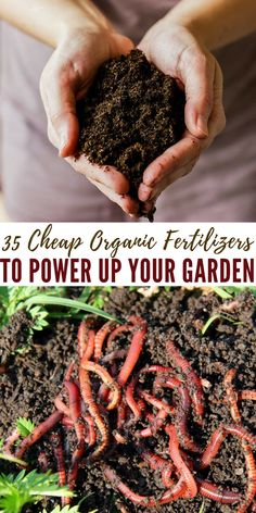 35 Cheap Organic Fertilizers to Power UP Your Garden - This article offers 35 cheap organic fertilizers that you can use. Its like I told you, life without fertilizer is one things and there will be crops you have to avoid like corn and melons but life with is something where you have abundance.