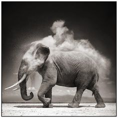 Nick Brandt Wildlife Photography. Some of the most stunning photos I have ever seen. www.nickbrandt.com/