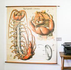 unique vintage medical human embryology