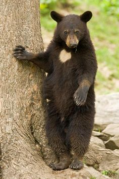 Young bear Photo by Maxime Riendeau