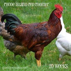 28 best rhode island official state things images on pinterest in