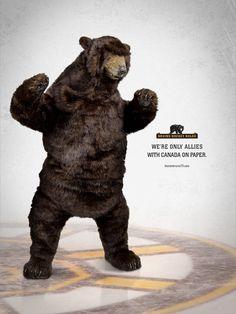 Bruins Bear Fact
