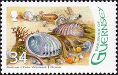 Známky: Green Ormer (Haliotis tuberculata) (Guernsey) (Designation of L'Eree Wetland as Ramsar Site) Mi:GG 1097,Yt:GG 1107,Sg:GG 1124