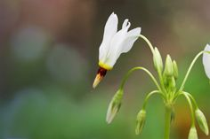 The Spring Wildflower Pilgrimage in Gatlinburg: Everything You Need to Know