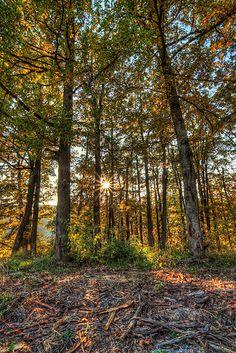 Autumn Sun in the woods, Krupina, Slovakia Woods, Autumn, Sun, Plants, Fall Season, Woodland Forest, Fall, Forests, Plant