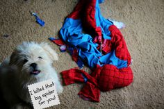"""""""I killed that spider for you.""""   I killed Spidey. And I'm too cute to scold."""