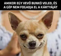 funny memes memes videos faces faces reaction faces reaction videos hilarious hilarious texts hilarious texts crush sarcastic sarcastic dark en espanol pictures funny pictures funny pictures humor quotes quotes for women halloween costumes facts Funny Animal Jokes, Funny Dog Memes, Crazy Funny Memes, Really Funny Memes, Funny Animal Pictures, Cute Funny Animals, Funny Relatable Memes, Animal Memes, Funny Cute