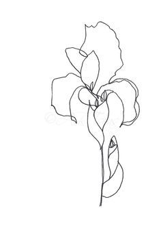 Image Result For Abstract Iris Flower Prints Art Minimalist Drawing Botanical Drawings