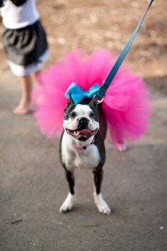 Custom Dog tutu choose your colors SEWN Small to Large. $15.00, via Etsy.