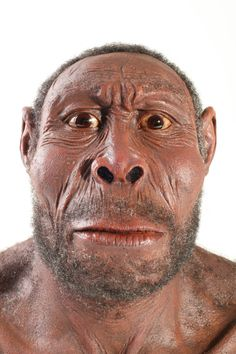 Democratic Underground - So was this Homo erectus or Homo ergaster