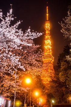 Tokyo tower in cherry blossom