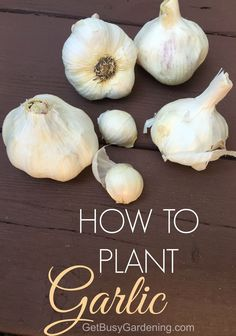 My first attempt at growing garlic was an epic failure!! I gave up on ever trying to grow it again. But, after reading this blog post, I realized I was just planting it at the wrong time. Dah! Now I know exactly when and how to plant garlic, and I'm definitely going to try growing it again this year!! I'm super excited!