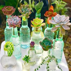 water therapy makes for beautiful succulent display! water therapy makes for beautiful succulent dis Propagating Succulents, Succulent Gardening, Succulent Terrarium, Garden Plants, Container Gardening, Indoor Plants, House Plants, Green Garden, Indoor Gardening