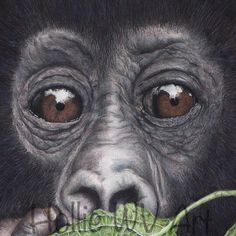 So beautiful x Forest Conservation, Mountain Gorilla, Color Pencil Art, Lovers Art, Colored Pencils, How To Find Out, My Etsy Shop, Artwork, Faces