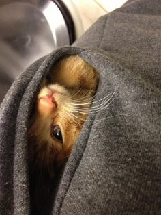 The world would beabetter place ifeveryone had alittle cat like this intheir pocket