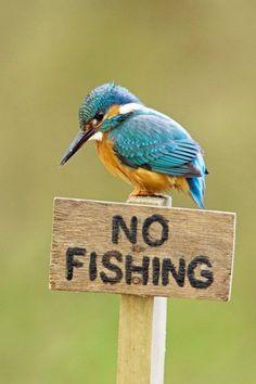 Regeln, immer nur Regeln - dieser Eisvogel befindet sich irgendwie im Gesetzeskonflikt: Am River Alde im britischen Suffolk hat er ob der menschlichen Kontrollwut offenbar miese Laune bekommen – was ihn aber ganz sicher nicht vom nächsten Fischzug abhalten wird.